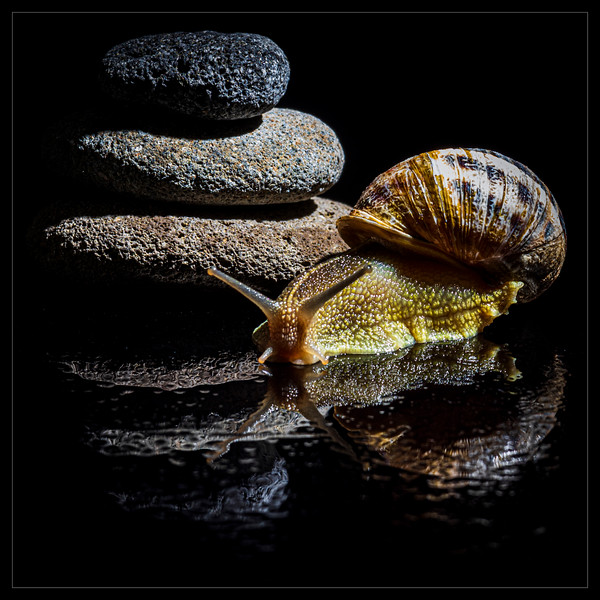 Escargot et reflets (Snail and reflections)