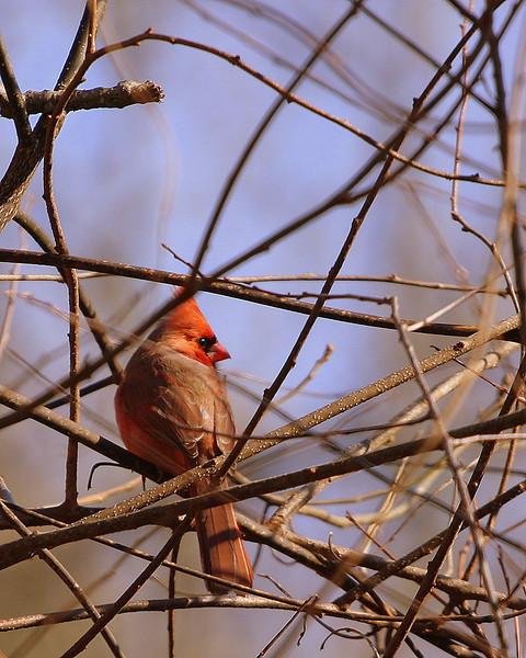 2009 - February in the Backyard