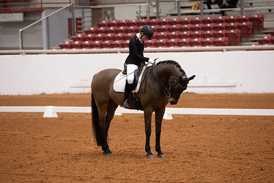 Horse 156