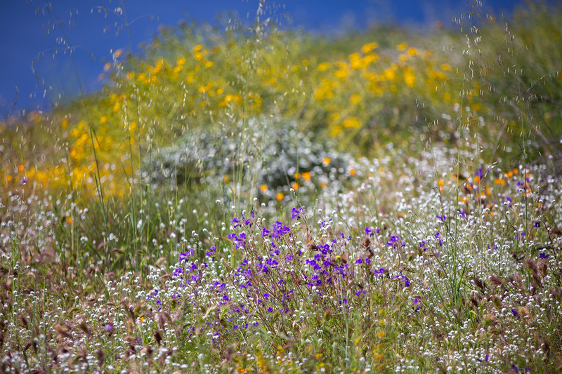Spring Flowers B-129.jpg