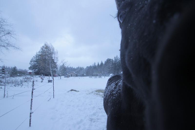 snow (92).JPG