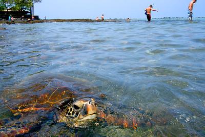 Wildlife of Hawaii