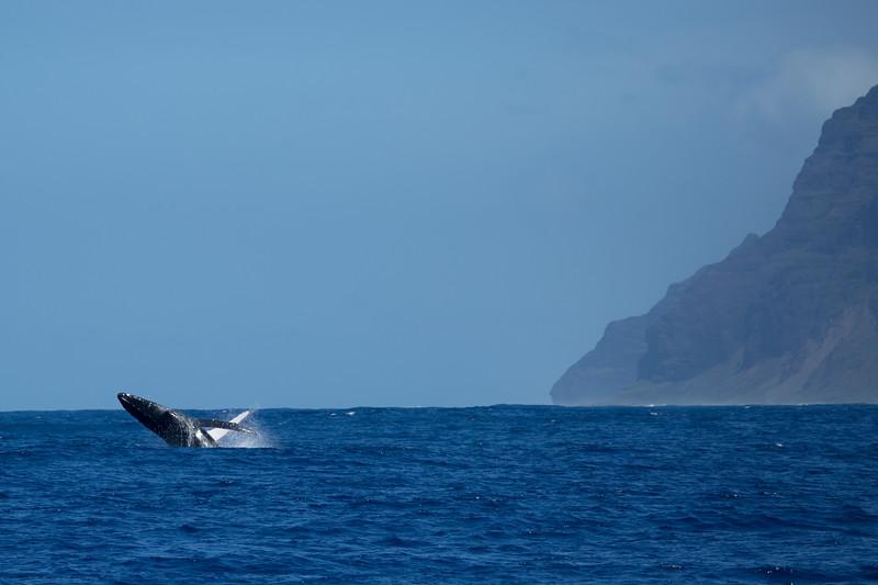 whales-leila-49.jpg