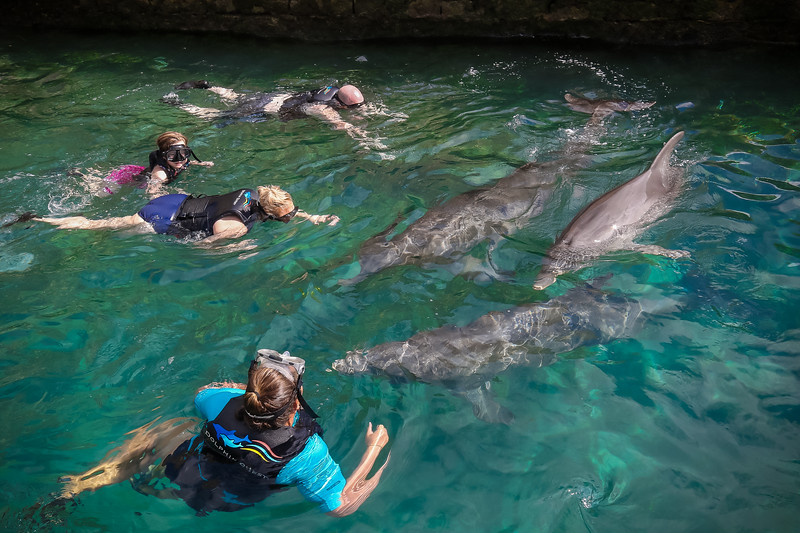 2019 August Dolphin Quest-117.jpg