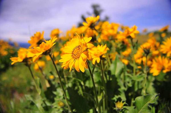 Gorge Flowers