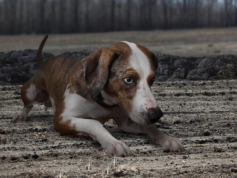Douglas-dog-6.jpg