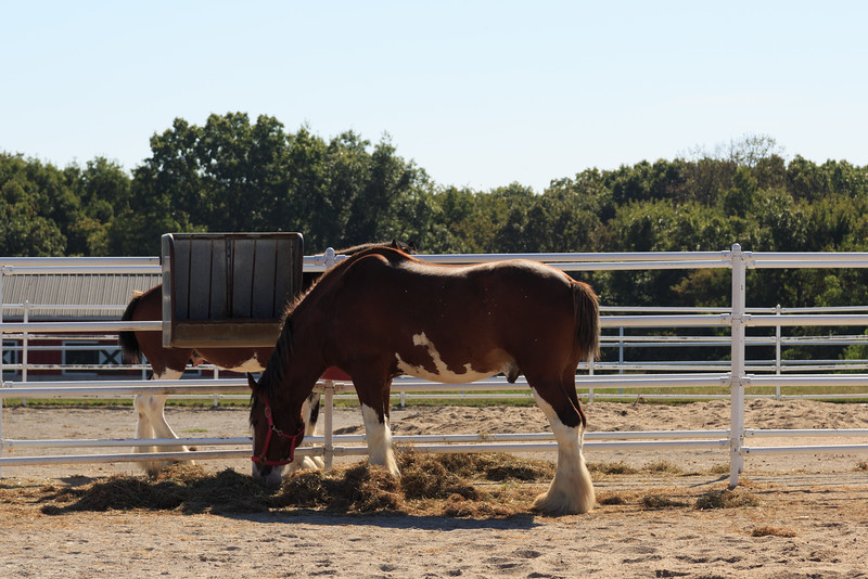 2015_09_26 Warm Springs Ranch 003.jpg