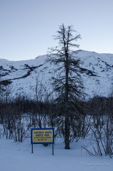 USA-Alaska-atigun pass-3071.jpg
