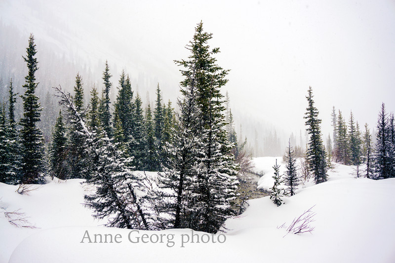 winterwonderland-4.jpg