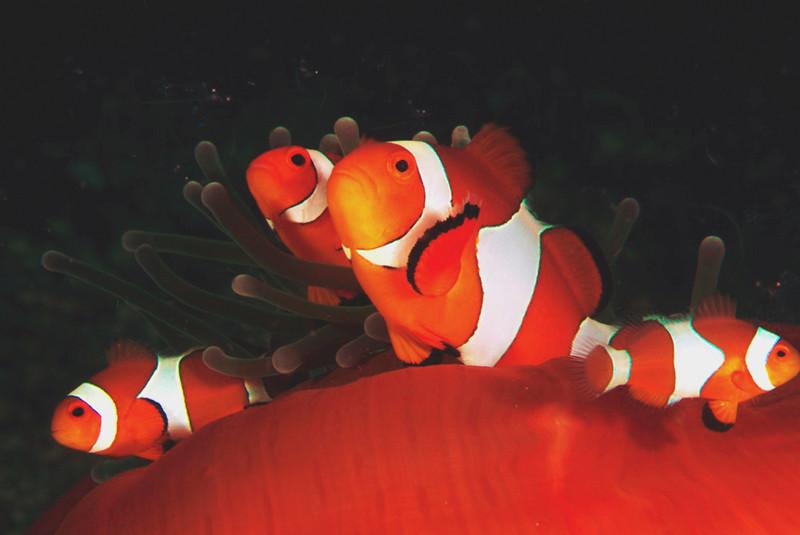 anemone orange.jpg