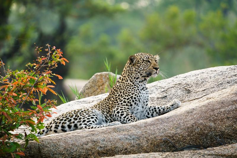 LeopardHills-20171024-1790.jpg