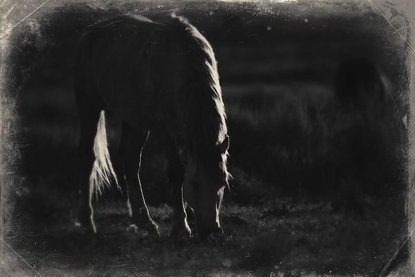 2020 Wild Horses