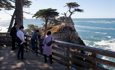 The Lone Cypress in Pebble Beach suffers storm damage