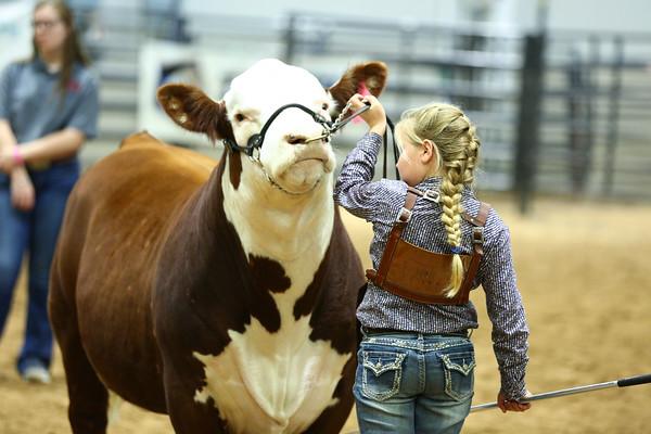 Bull Show