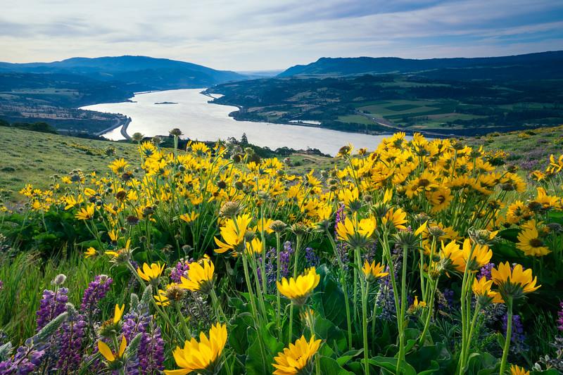 Columbia River Gorge Spring 2019-14.jpg