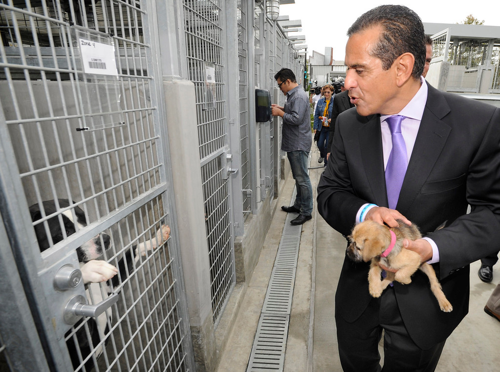 . Los Angeles Mayor, Antonio Villaraigosa interacts with some of the dogs as the South Los Angeles Animal Services Center officially opened today at 1850 West 60th Street.  Villaraigosa and other city officials cut a ribbon and went on tours to see the state of the art facility that showcases animals in a way that is humane, clean and allows pets to meet potential new families. The outdoor kennels reduce disease transmission and noise, while other animals like rabbits and reptiles are given more prominence in the location where they are viewed.  Los Angeles, CA 4/4/2013(John McCoy/Staff Photographer