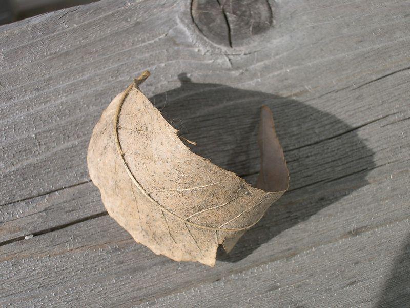 Optio S, macro mode, hand held.  Outdoors, leaf on deck rail.