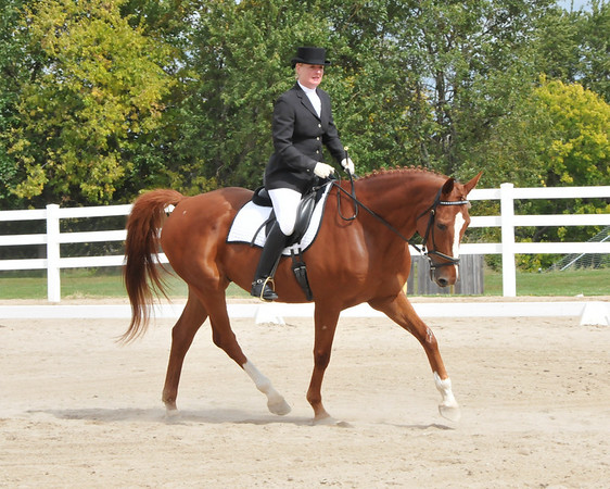 KCDS Championship and Open Schooling Show