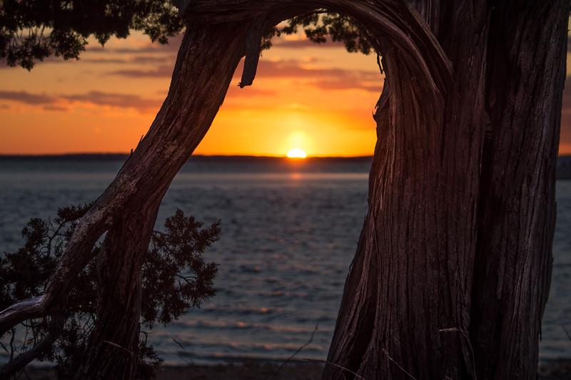 sunset tree redo (1 of 1).jpg