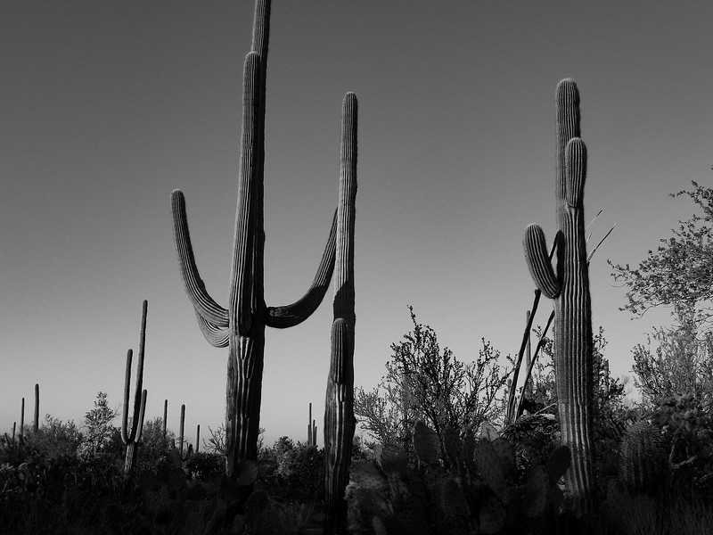 saguaro national park-1172.jpg
