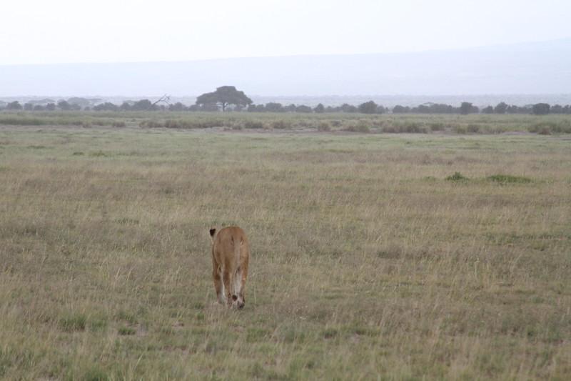 Kenya 2019 #2 1406.JPG
