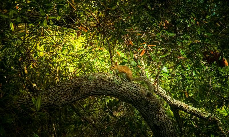 Forest Shadows-090.jpg