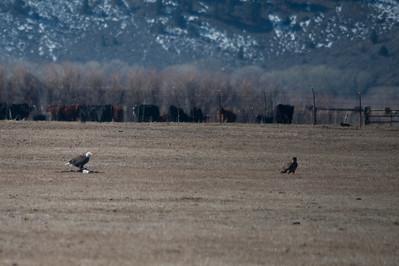 Carson Valley Eagles 2013-02