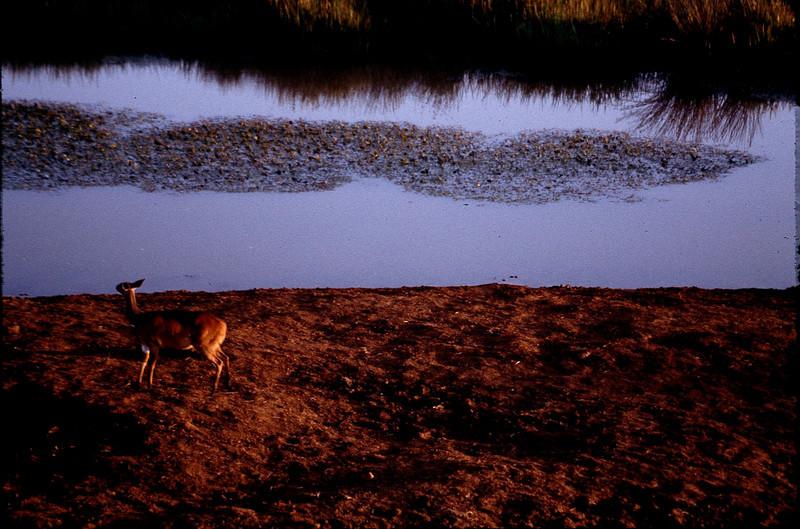 Kenya1_025.jpg