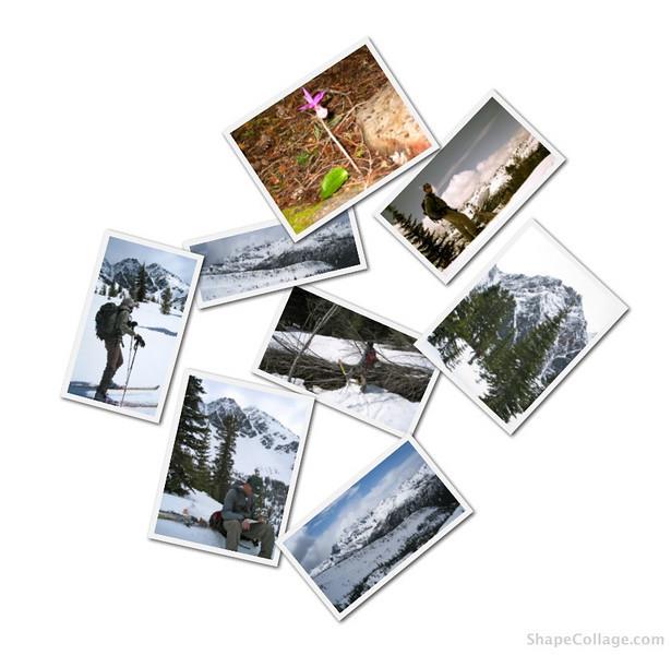 White Pine Chiwaukum.jpg