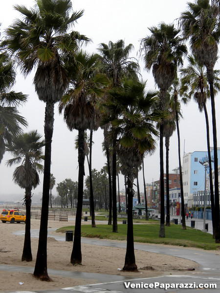 Venice on a rainy day.  Photo by Venice Paparazzi.  www.venicepaparazzi.com