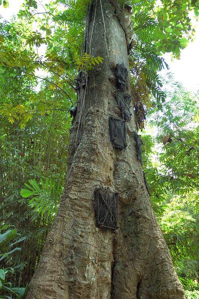 Baby Grave Tree