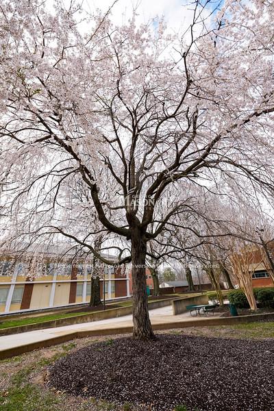 Fairfax Campus Spring