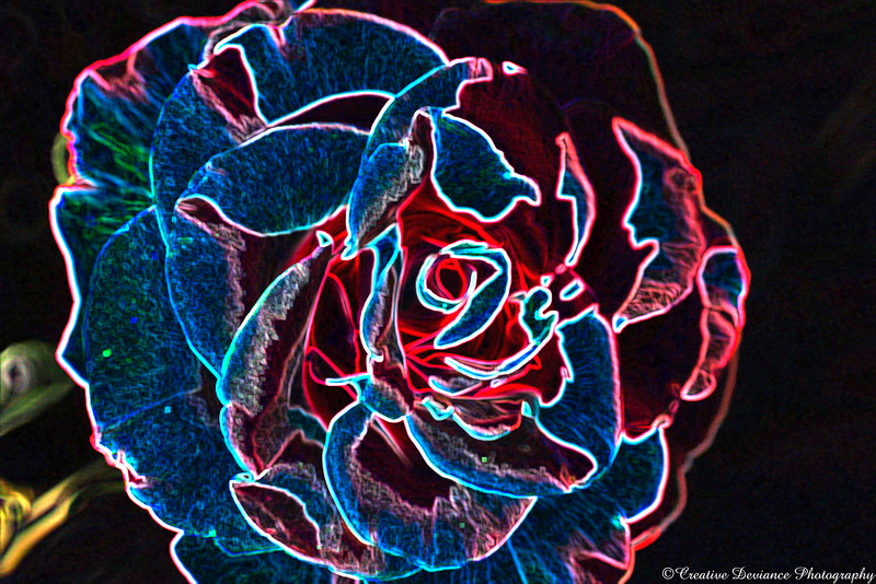June 10th, 2009  This was rather fun to make. I'm no pro with Photoshop, but I do like to play. I was working with an image of a rose I took on Sunday and this is what I made. I really liked how it turned out all neon.