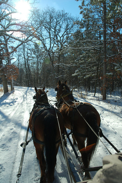 Horse Trail in the Snow.jpg