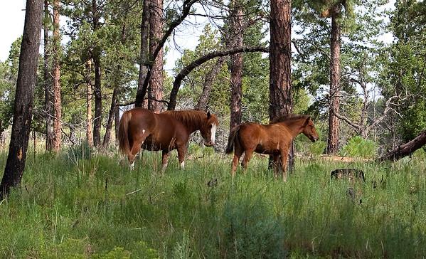 Deer and Elk and Horses