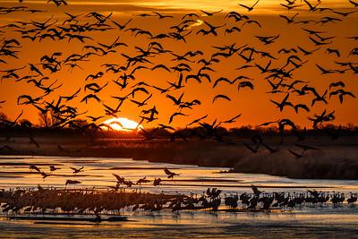 Sandhill Crane Migration in Nebraska