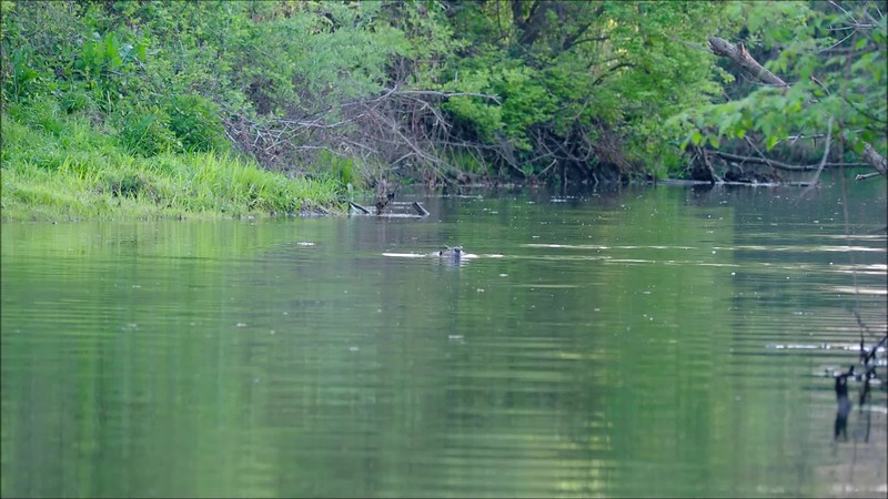 Big Chico Creek in April.mp4