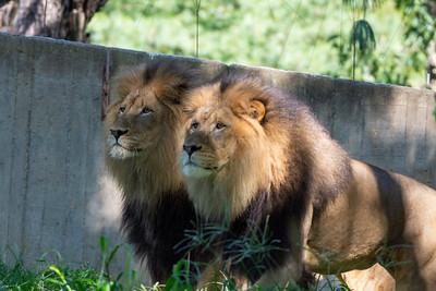 Summer zoo 2019