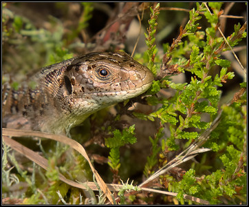Reptielen en amfibieën