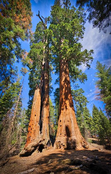 Sequoia -090616-059_AuroraHDR_HDR.jpg