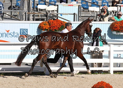 Tuesday Dixon Oval:  Class 109 Fillies Championship