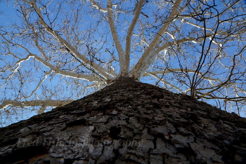 Clinton tree.jpg