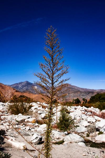 white-water-preserve-11.2019-v4.jpg