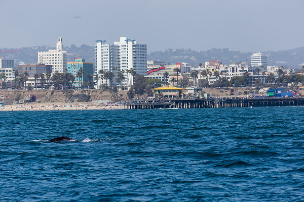 Marina Del Rey Whale Watching