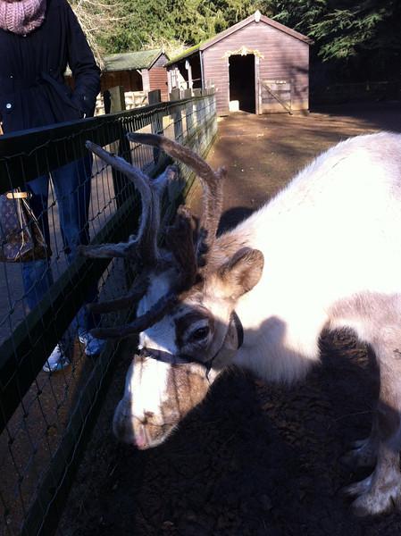 Cotswold Wildlife Park - January 2013