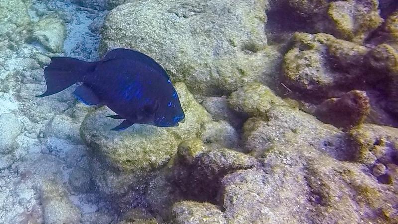 Ciesla-GOPR7689 - KC Blue Fish-0001.jpg