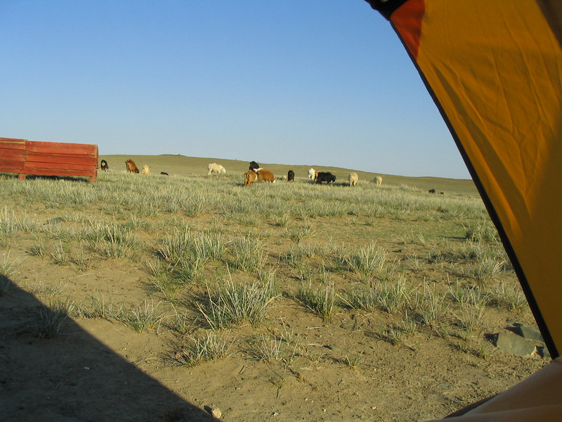 Waking up to farm animals.