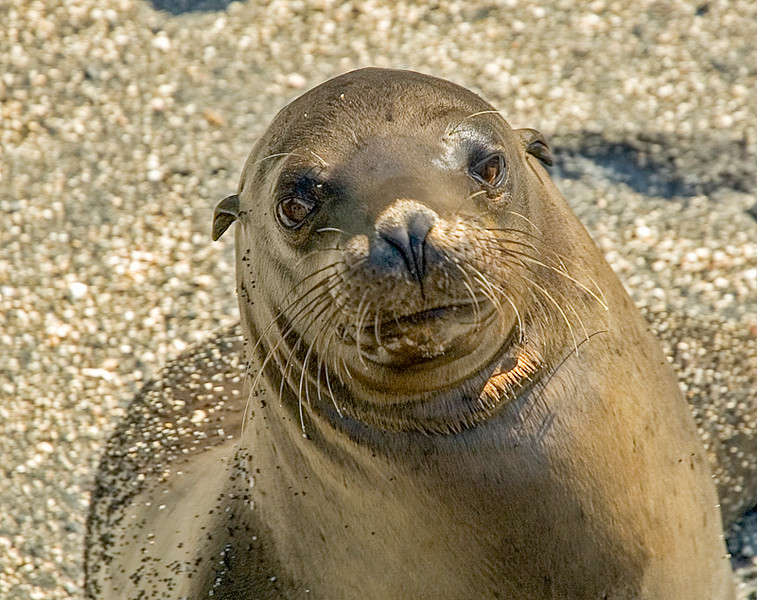 Galapagos_Sea Lions-3.jpg