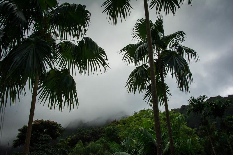Hawaii-211.jpg