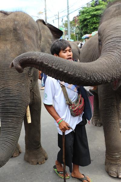 2014-11-14 Surin Elephant Welcome Feast 728.JPG